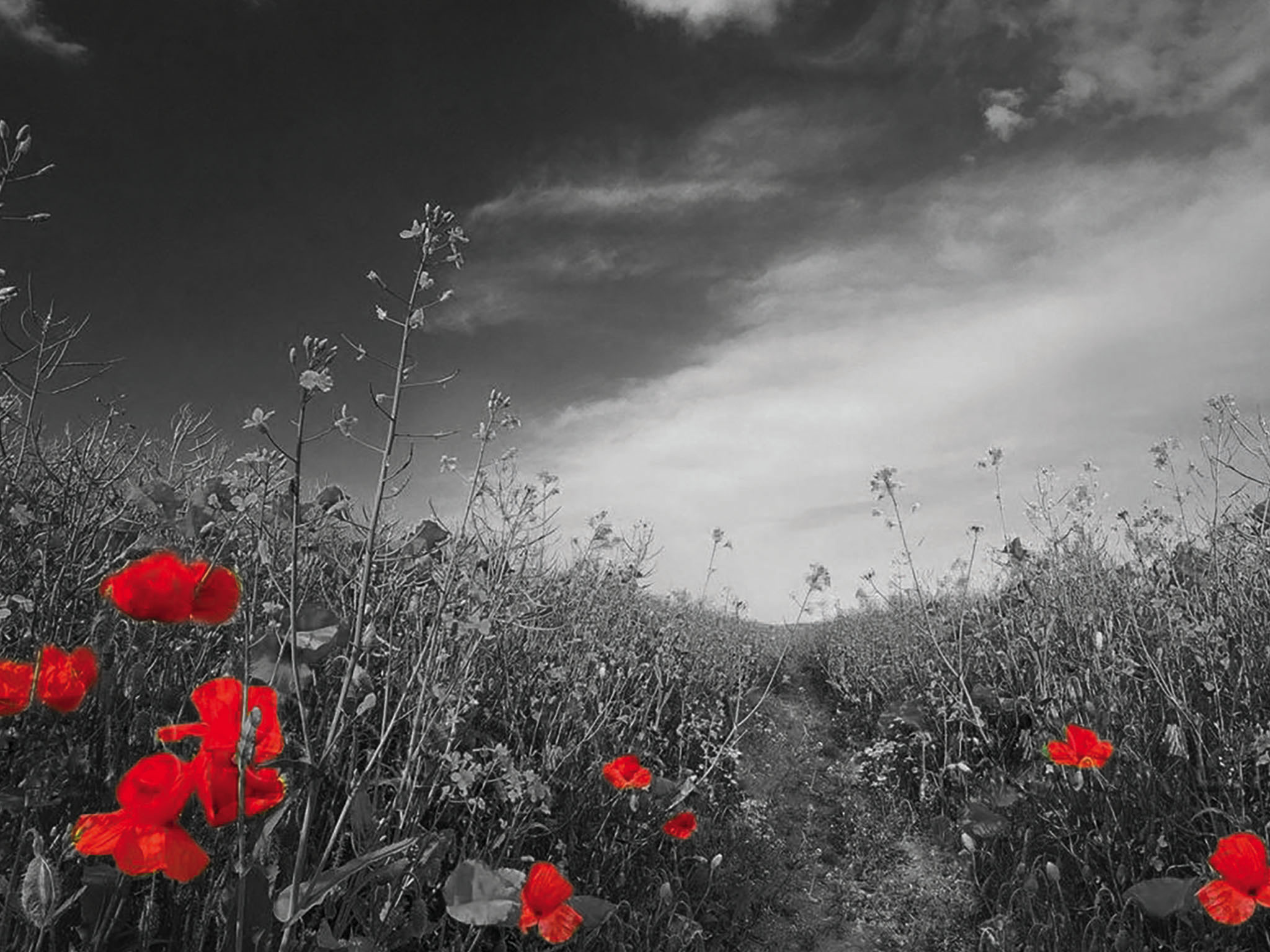 remembrance-day-small-v3.jpg